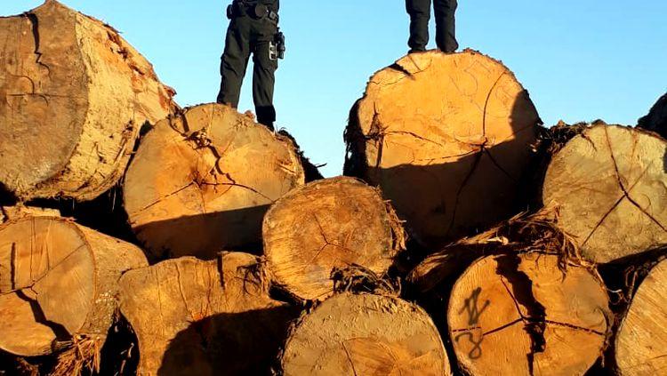 STJ nega liminar de engenheiro florestal preso no SOS Karipuna